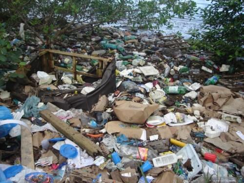Retirando o lixo das ruas